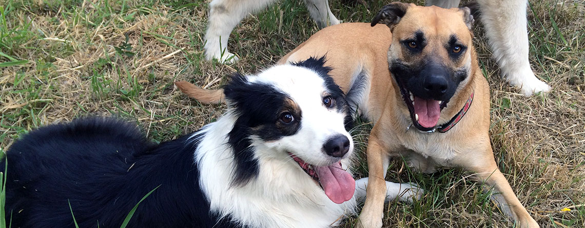 DAILY DOG PLAYGROUPS